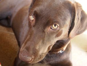 愛犬と視線を合わせて幸せホルモン